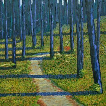 Réjean Lacroix artiste, Soleil au sous bois, Spruce bog trail, Parc Algonqui n, Ontario,